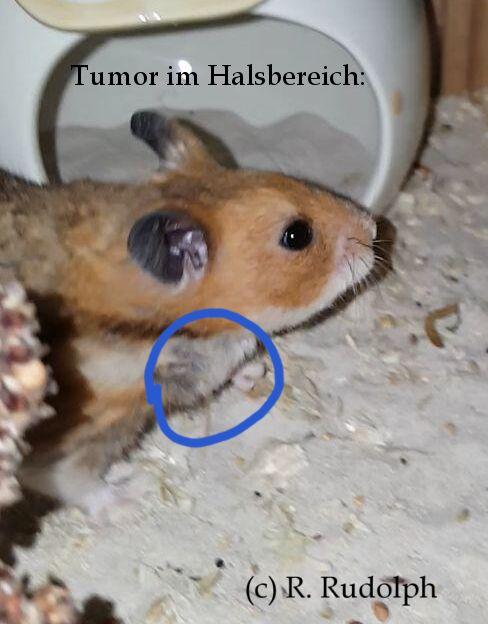 Anzeichen hamster stirbt Sterbeprozess eines
